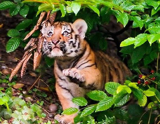 male tiger cub names for dogs